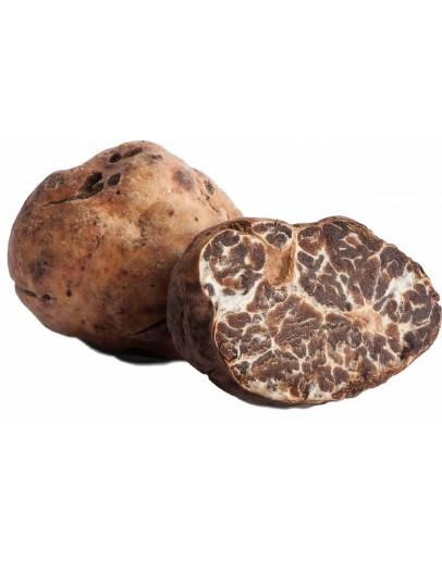 Пресни бели трюфели Borchii A-качество Пресни трюфели, Видове трюфели, Tuber Borchii изображение