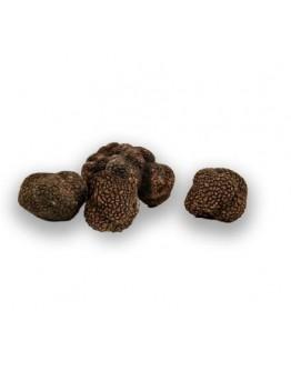 Пресни черни есенни трюфели Uncinatum C-качество